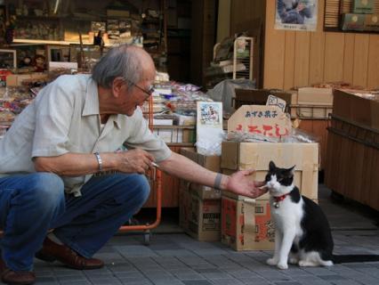 猫と戯れる人