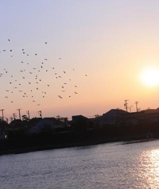 夕暮れに飛び立つ鳥たち