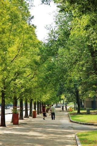 緑の中を歩く夫婦