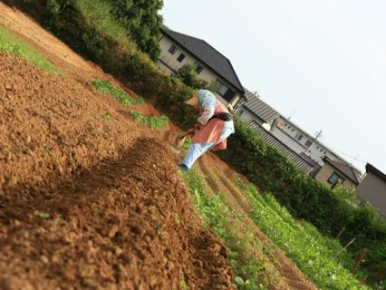 畑を耕す人