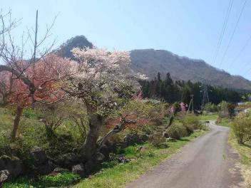 花咲く小道