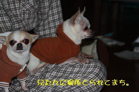 IMG_8995.jpg