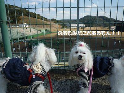 スポーツ観戦 (2)