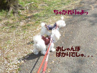 さくらちゃんⅡ 2
