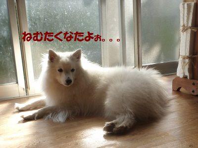 さくらちゃんⅡ9