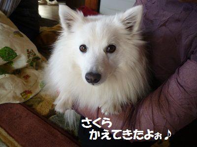 さくらちゃんⅡ6