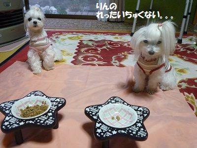 にゅー皿2