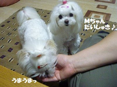 Mちゃん11