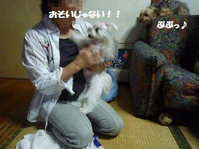 るりちゃんち5