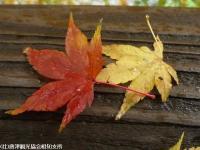02.見帰りの滝(2009年12月1日)