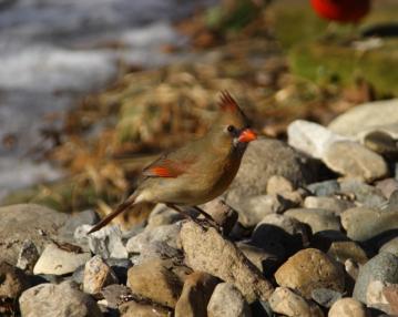 bird02192011_002.jpg