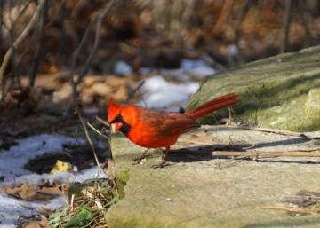 bird02192011_005.jpg