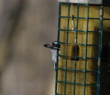 bird02192011.jpg