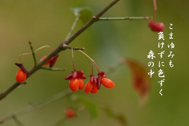 コマユミ2