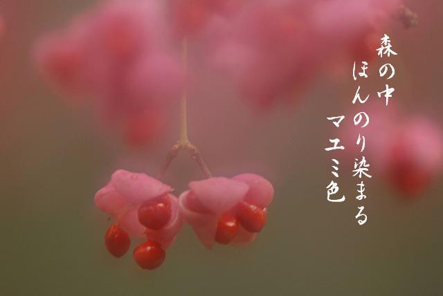マユミ12