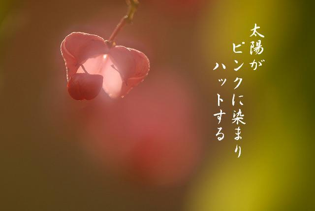 マユミ13