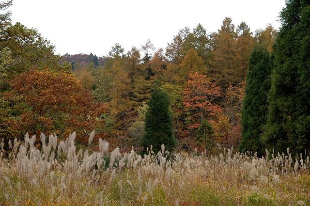 森林公園9