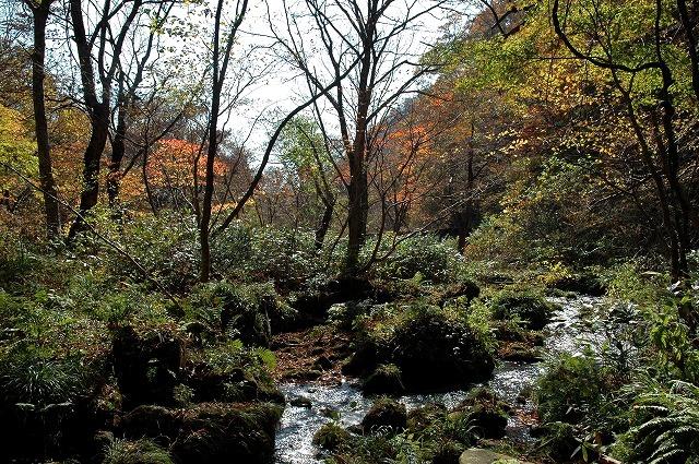 木谷沢渓流1