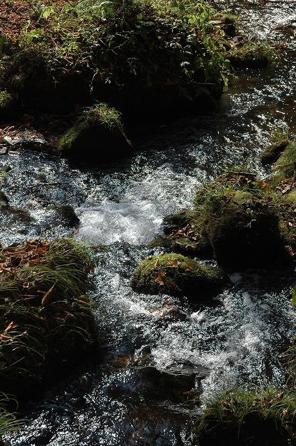 木谷沢渓流2