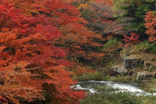 奥津渓の紅葉4