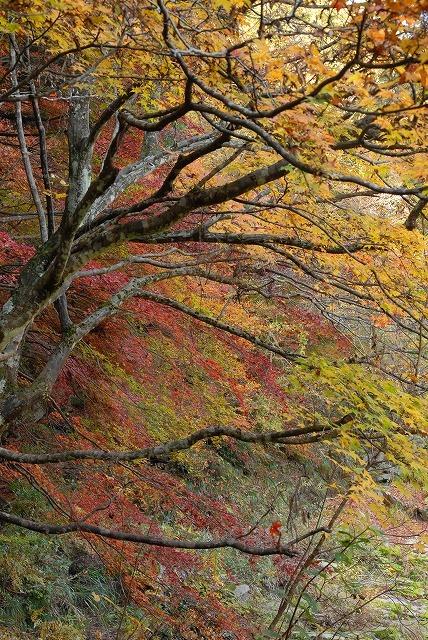 奥津渓の紅葉16