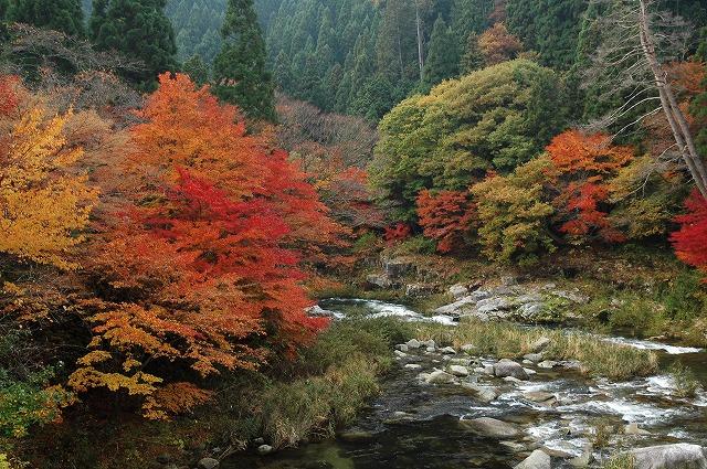 奥津渓の紅葉18
