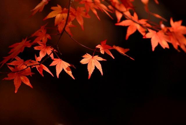 奥津渓の紅葉21