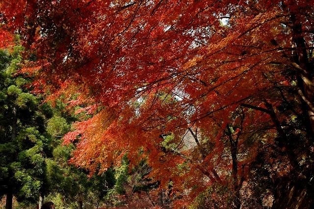 奥津渓の紅葉30