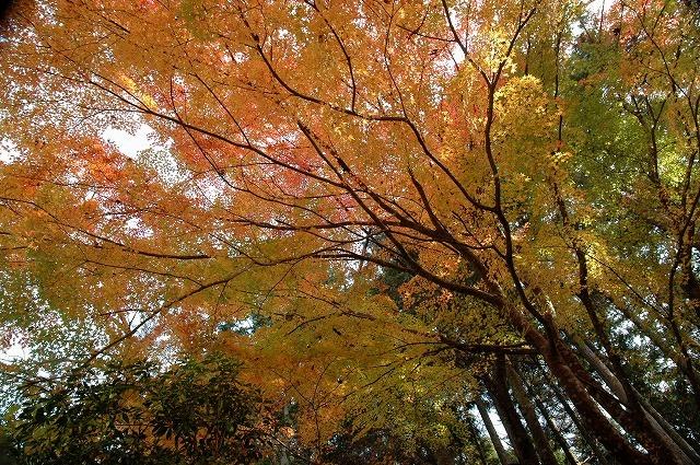 奥津渓の紅葉31