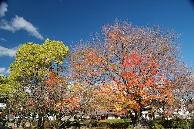 田中苑の櫂の木1