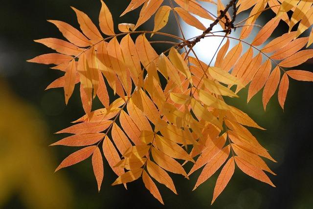 田中苑の櫂の木5