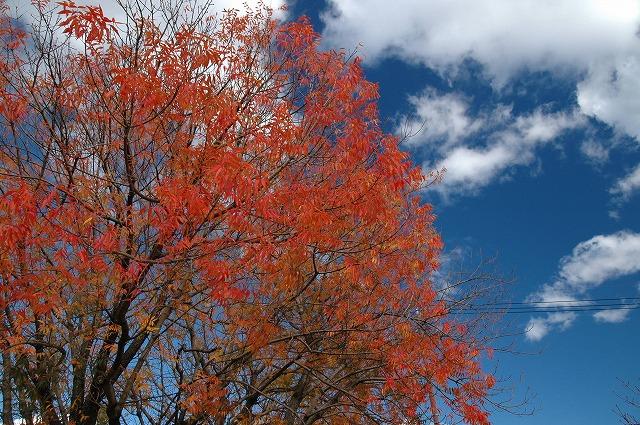 田中苑の櫂の木7