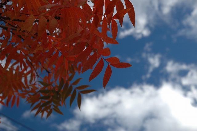 田中苑の櫂の木8