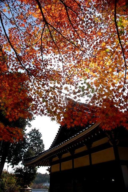 龍泉寺の紅葉7