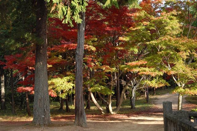 龍泉寺の紅葉11