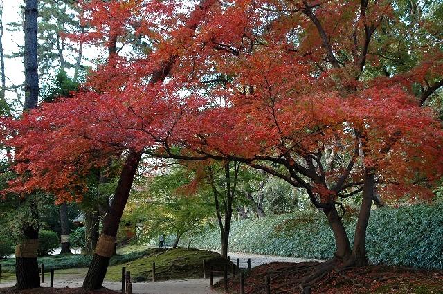 晩秋の後楽園4
