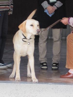 盲導犬ドロシー