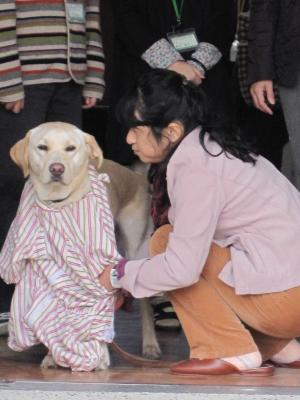盲導犬ドロシー1