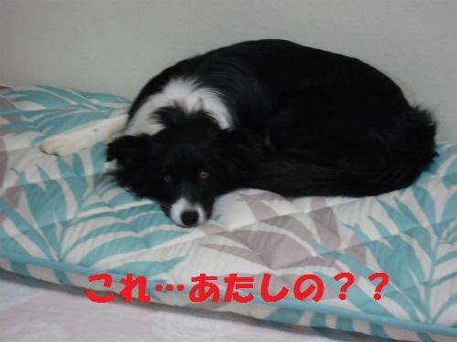 002_20130215221053.jpg