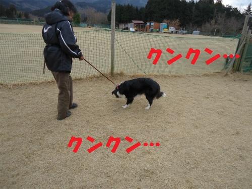 030_20130214215328.jpg