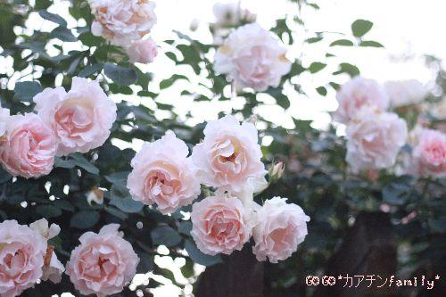 IMG_3749.jpg