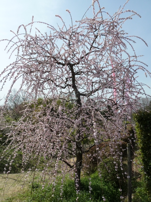 heijiT11(500-667.jpg