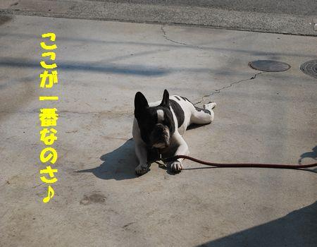 DSC_0002_20110412205551.jpg