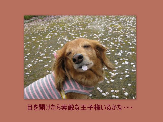 繧ウ繝ゥ繝シ繧ク繝・2_convert_20100409161456