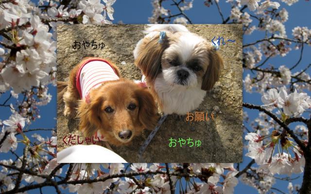 2010_03_30_convert_20100402163413.jpg