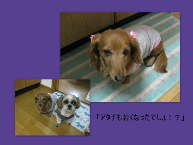 2010_04_151_convert_20100416160409.jpg