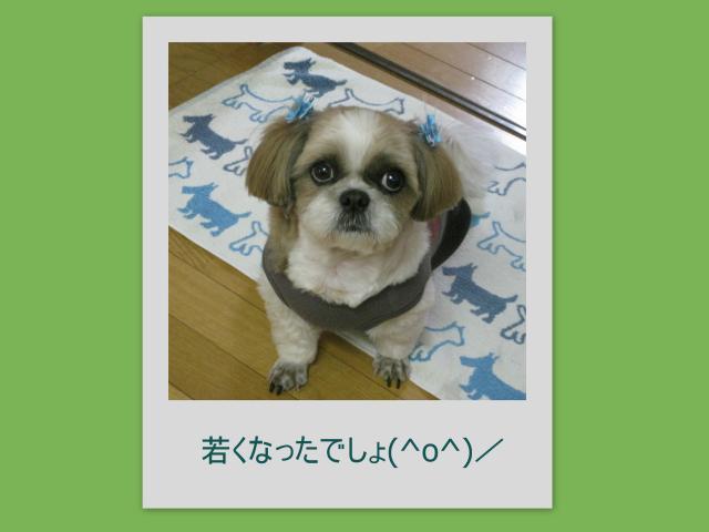 2010_04_15_convert_20100416160301.jpg