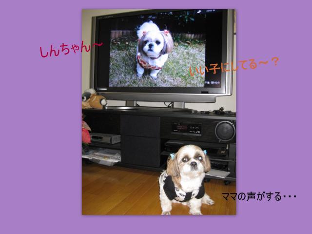 2010_04_28_convert_20100430162654.jpg