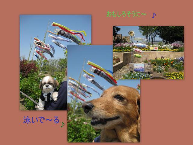 2010_05_01_convert_20100506094647.jpg