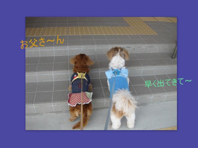 2010_05_024_convert_20100506094736.jpg
